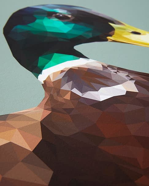 A detail of a green-headed mallard from the digital woodland wildlife art collection by Talia Giles.