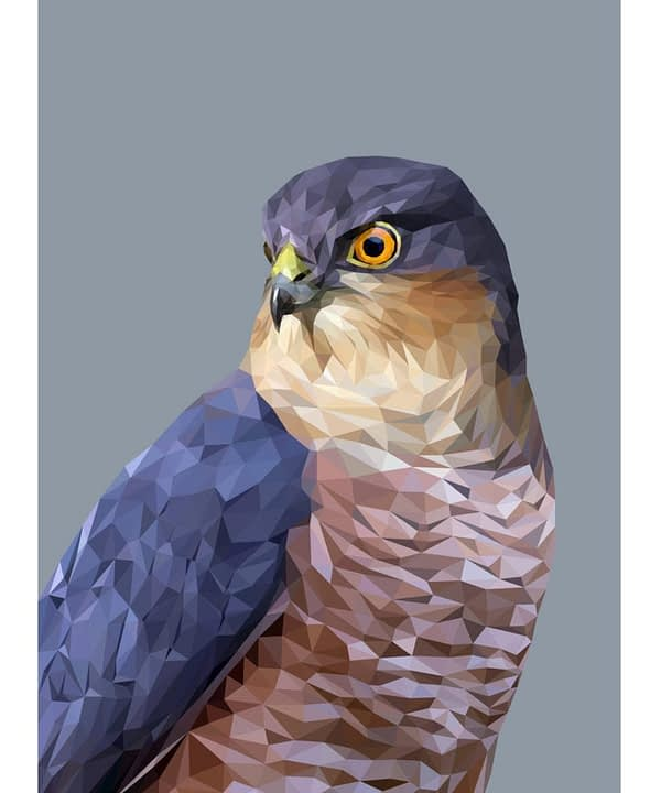 At captivating bird of prey drawing depicting a digitally drawn Sparrowhawk Giclée printed on fine art paper.